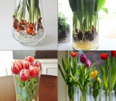 87f81993263c46b91b9d407d960fe466--growing-tulips-planting-tulips